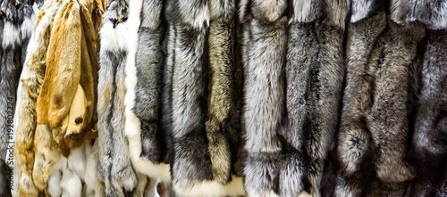 Silver and red fox furs