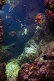 aquarium avec poissosn et coraux
