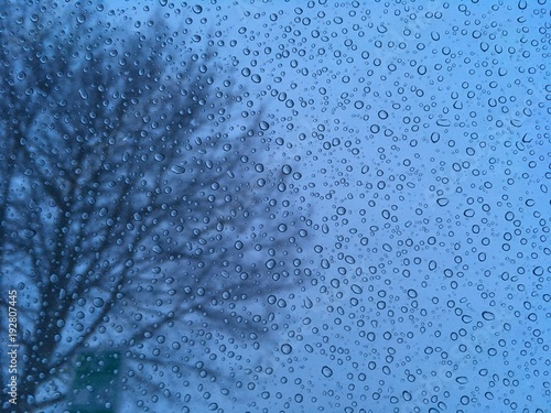 Raindrops on window with blurred tree in background