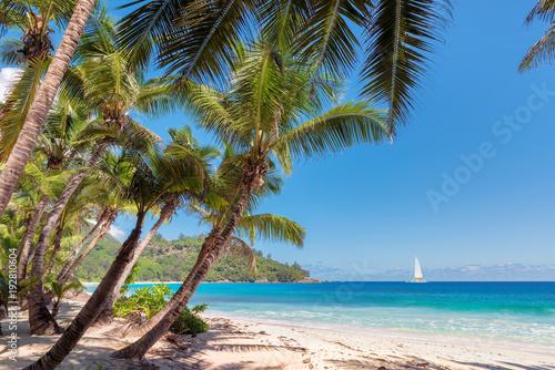 Piaszczysta plaża z palmami i biały jacht w turkusowym morzu na rajskiej wyspie.