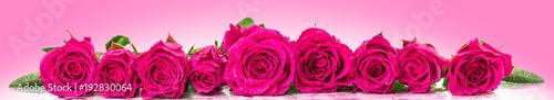 Foto op Plexiglas Panoramafoto s Roses in a row. Panoramic image