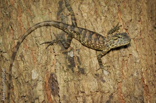 Fotobehang Kameleon Image of brown chameleon on tree. Reptile. Animal.