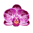 Isolated orchid flower