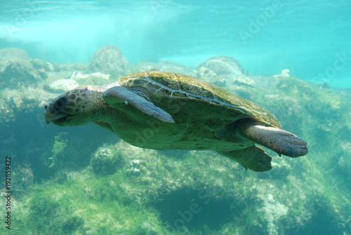 Fotobehang Schildpad Meeresschildkröte