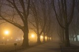 Avenue of plane trees on a cold, misty night - 192871249