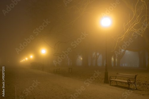 Fototapeta Avenue of plane trees on a cold, misty night