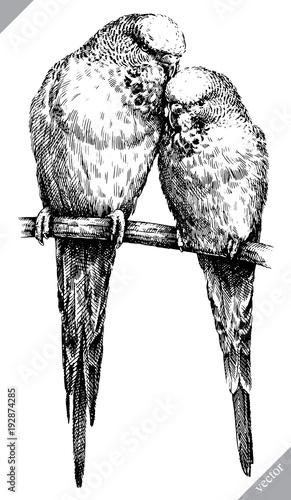 schwarzweiss-gravieren-lokalisierte-papageienvektorillustration