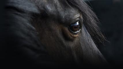 Pferdeportrait