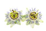 Passiflora (Passiflora caerulea)