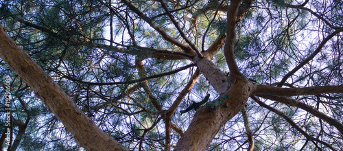 tree crowns in the summer forest. nature, background. - 192916089