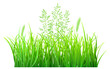 Green grass and spikelets on white background