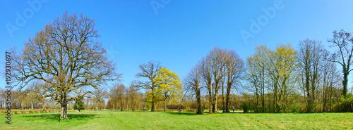 Parklandschaft im Frühling mit kahlen Bäumen - 192930697