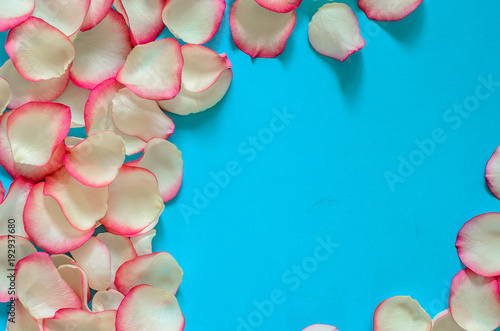 tender petals of roses pink and cream colored scattered in a circle on a blue background