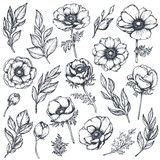 Vector collection of hand drawn anemone flowers - 192939447
