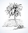 Palm on beach.  Vector drawing