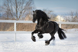 Black friesian horse with the mane flutters on wind running gallop on the snow-covered field in the winter - 192963070
