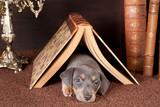 Sleeping under a book - 192969045