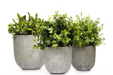 Pot green plants in and pots - 192969626