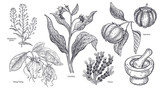 Set of imedical plants, flowers and herbs. - 192972250