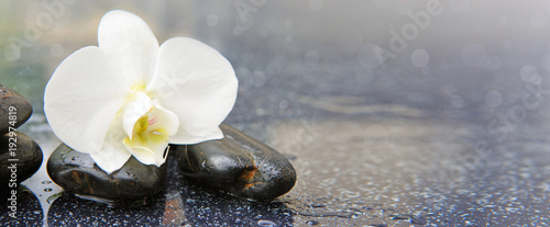 Single white orchid and black stones close up. © Swetlana Wall