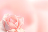 Blurred background with rose of pink color - 192979411
