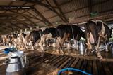 Cows in a dairy farm - 192991492