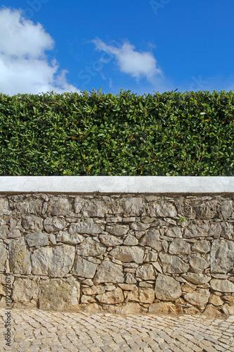 Fototapeta old stone wall, hedge and blue sky