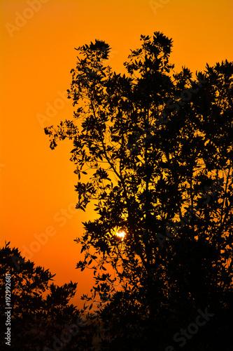 Plexiglas Oranje eclat Sunrises and silhouette