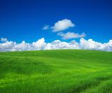 green field with blue heaven - 193011445