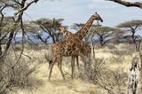 Fototapeta africa, nature, travel
