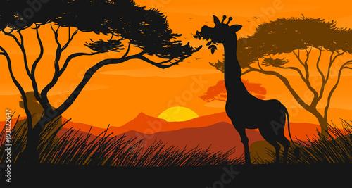 Papiers peints Jeunes enfants Silhouette scene with giraffe eating leaves