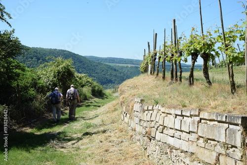 Keuken foto achterwand Wijngaard Wanderer in einem Weinberg bei Winningen