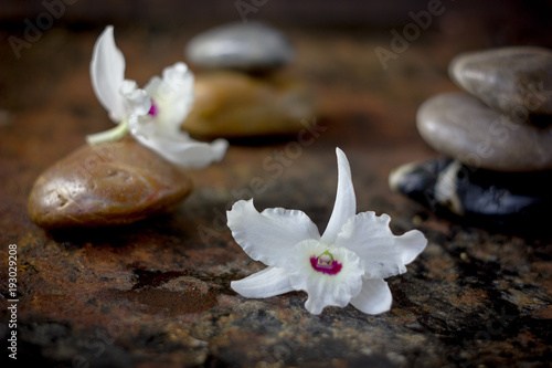 Foto op Plexiglas Spa Spa stones and orchid flowers on dark background.