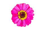 pink flower - 193049617