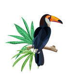 Tropical bird toucan is sitting on branch with green tropical leaves. Vector hand drawn illustration isolated on white background. - 193052652