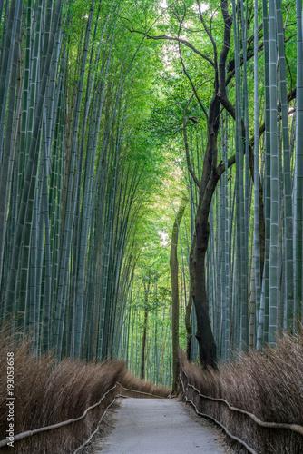 Arashiyama Bamboo forest © Manuel