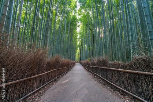Early morning sunrise in Arashiyama Bamboo forest © Manuel