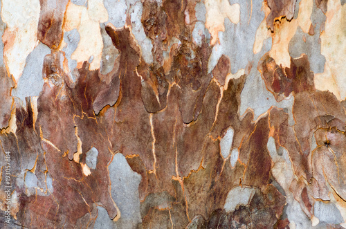 dark-orange-patterned-bark
