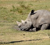 Rhinoceros at wildlife reserve - 193058087