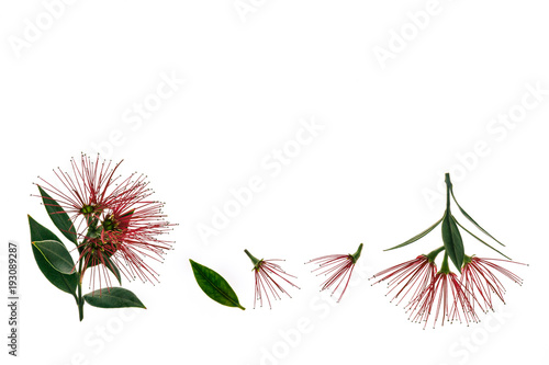 Foto Murales pohutukawa tree flowers isolated on white background with copy space