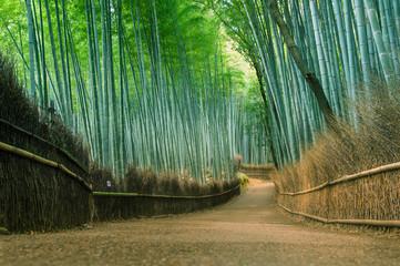 Bamboo forest at Arashiyama, Kyoto, Japan.