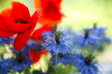 Cornflower and poppy in the bouquet - 193093685