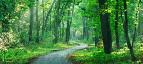 Wanderweg windet sich durch sonnigen grünen Wald - 193114457