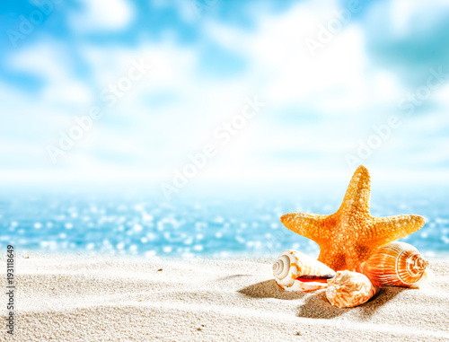 Shell on sand and free space for your decoration.  - 193118649