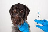 hands of vet with syringe for injection for dog