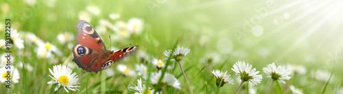 Fotobehang Pistache Schmetterling 431