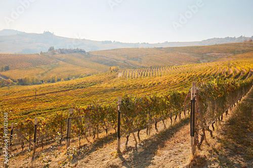 Keuken foto achterwand Wijngaard Vineyards and hills in autumn with yellow leaves in a sunny day