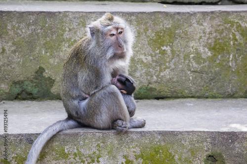 Affen Mutter mit Kind