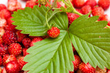 Strawberry and leaf on strawberry  background