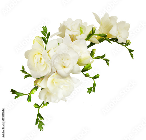 White freesia flowers in a beautiful composition - 193131054